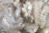 1 kilo lamswol - Veenkolonist (ivoorwit)_