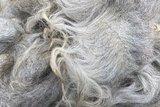 500 gram A-klasse - Drents Heideschaap (zilvergrijs)_
