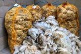 Volume voordeel: 5 kilo basis wol / vulwol - puur (wolwit)_