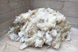 1 kilo basisklasse - Hollands boerenschaap (ivoorwit)_