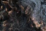 1 kilo lamswol - Blauwe Texelaar (donkergrijs)_