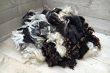 1 kilo lamswol - Ned. Bonte Schaap (bont gevlekt)_