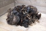 500 gram A-klasse - Drents Heideschaap (donkergrijs)_