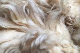 1 kilo lamswol - Drents Heideschaap (ivoorwit)_