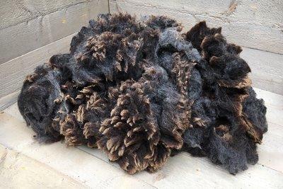 1 kilo A-klasse - Blauwe Texelaar (middengrijs)