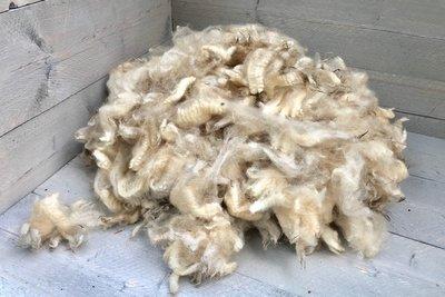 1 kilo lamswol - Veenkolonist (ivoorwit)