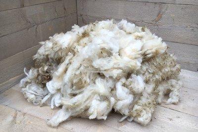1 kilo basisklasse - Hollands boerenschaap (ivoorwit)