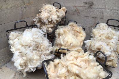 Witte wieven: 5x500 gram witte wol van 5 unieke rassen
