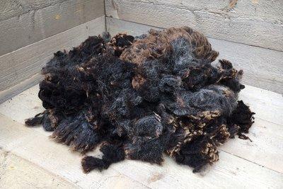 1 kilo lamswol - Blauwe Texelaar (donkergrijs)