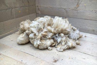 500 gram A-klasse - Kempisch Heideschaap (ivoorwit)