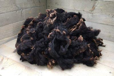 1 kilo lamswol - Dassenkop Texelaar (donker bruingrijs)